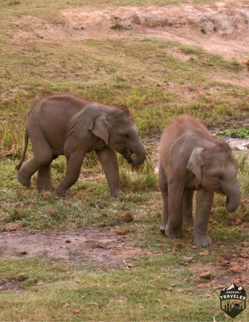 elefant-abbby-21